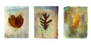 Art.com Leaf Prints