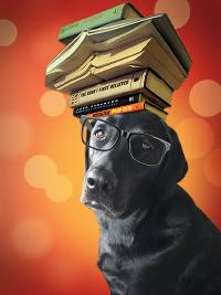 BookDoggy's Newsletter Kindle Fire Giveaway!