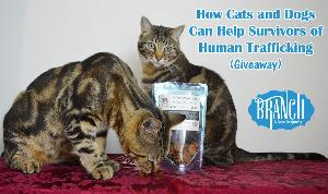 BRANCH Cat and Dog Treats Giveaway