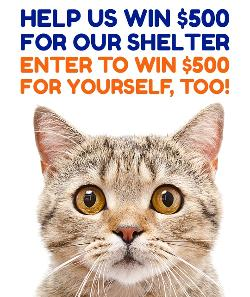 Cute cat,text: Help us win $500 for our shelter, enter to win $500 for yourself too!