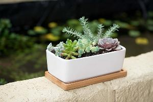 DIY Succulent Planter Pot