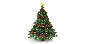 Early Christmas Tree Giveaway