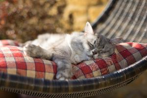 Enter to WIN $25,000 for the ultimate catio for your kitty!