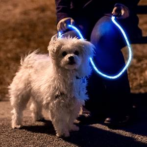 illuminated Nitely Leash