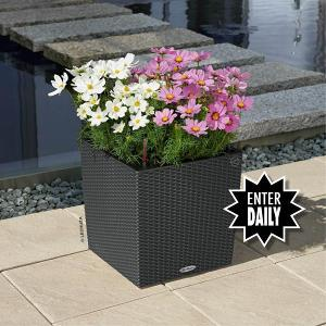 Lechuza Cube Cottage Planter