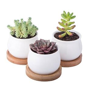 Mini Succulent Planter Set Giveaway