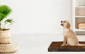 The Eco-Friendly Pooch Potty Pad Sweepstakes