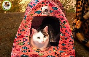 The Gone Fishin' Cat Tent Giveaway