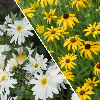 Enter to win All-America Selections Perennials to plant this fall