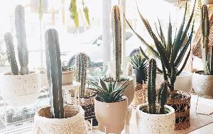 WIN $1,000 TO SHOP FOR PLANTS