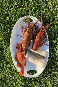 Win a bundle of premium fresh seafood valued at $150+ This exciting bundle includes 2 whole CA Spiny Lobsters, 1 whole Ikejime Rockfish, and 2lbs of Ikejime Black Cod!