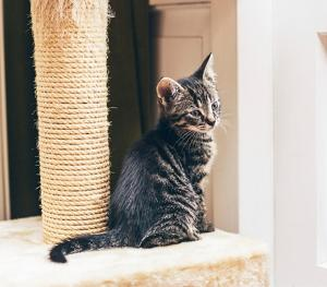 Win a tree scratch post activity centre for your cat Giveaway!!!