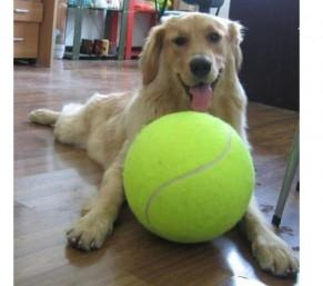 WIN: Giant Tennis Ball - Dog Toy