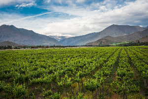 WIN: the South American Wine Journey Getaway
