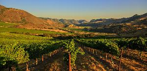 WIN: trip for 2 to Napa Valley